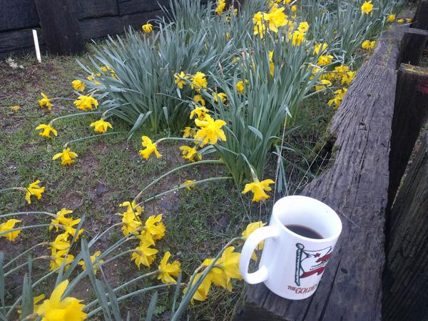 Jezra's coffee picture 2017-02-21