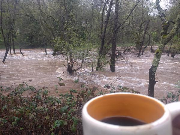 Jezra's coffee picture 2018-04-07